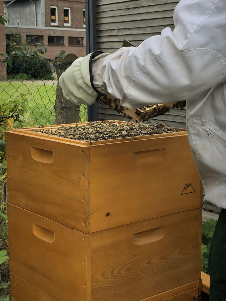 Honig Ernte 1