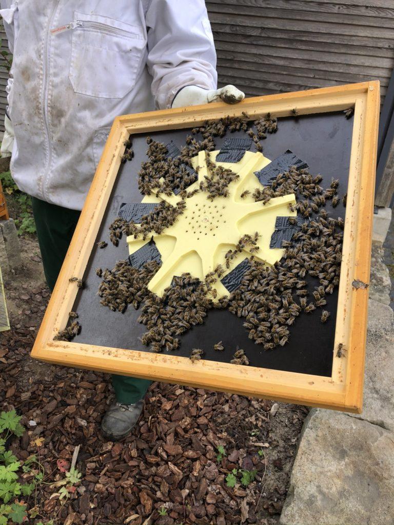 Honig Ernte 2