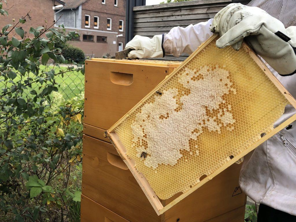 Honig Ernte 3