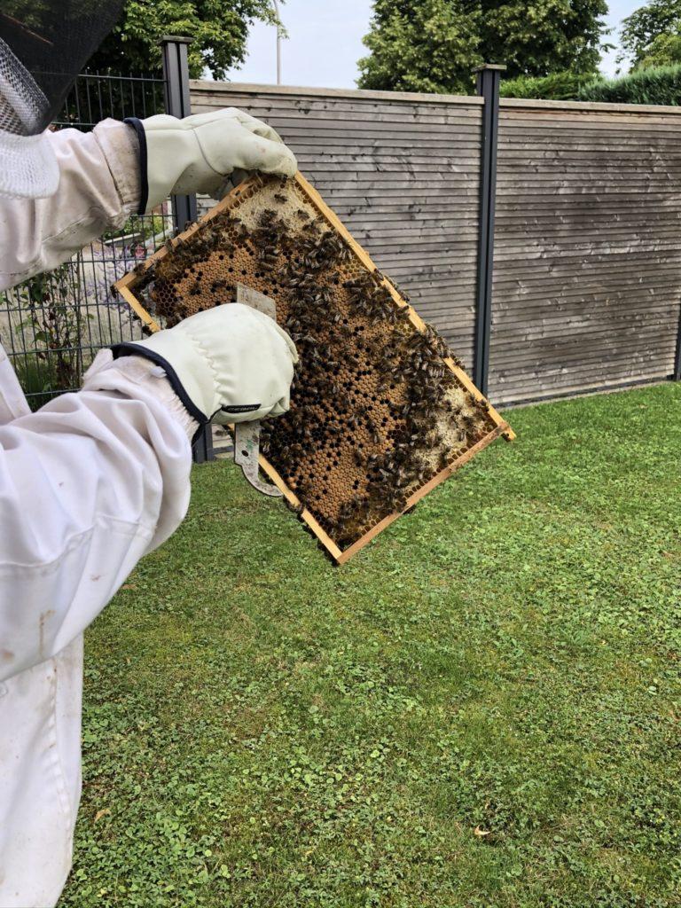 Honig Ernte 4