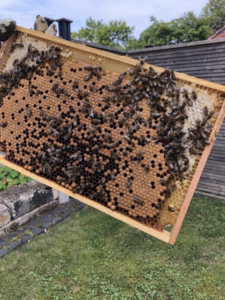 Honig Ernte 5